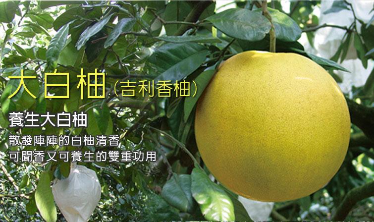 大白柚、晚生柚、晚白柚