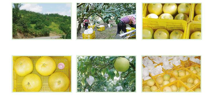 白柚相關照片